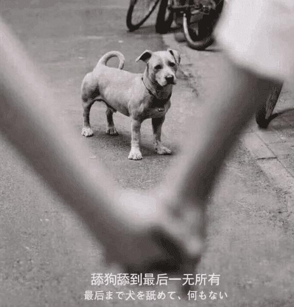 """转载:关于最近圈子很火的""""舔狗日记""""解说"""